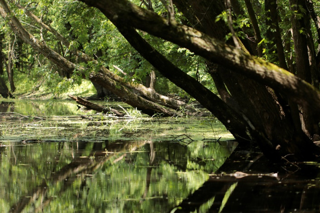 Oxbow-wetland-at-Timmons-Grove-Marshall-County-the-old-channel-of-the-Iowa-River