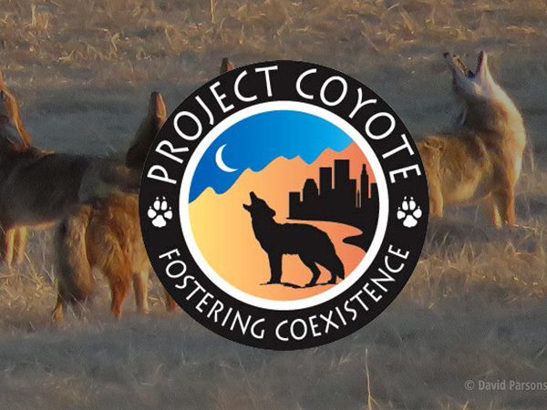 Project-Coyote-Feature