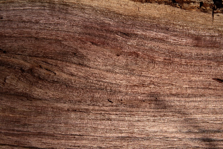 The luster of freshly split Black Walnut